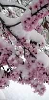 Może być zdjęciem przedstawiającym kwiat, przyroda i drzewo